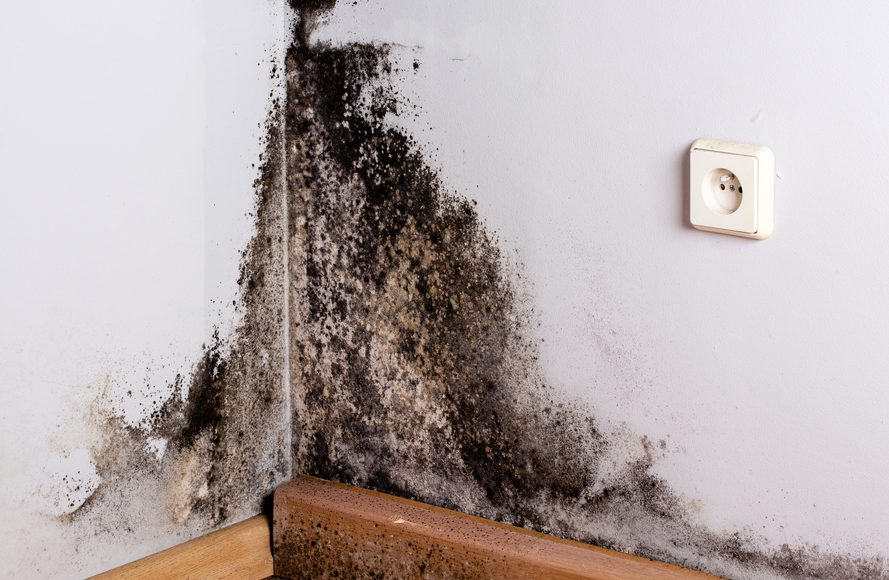 symptoms of black mold exposure in adults