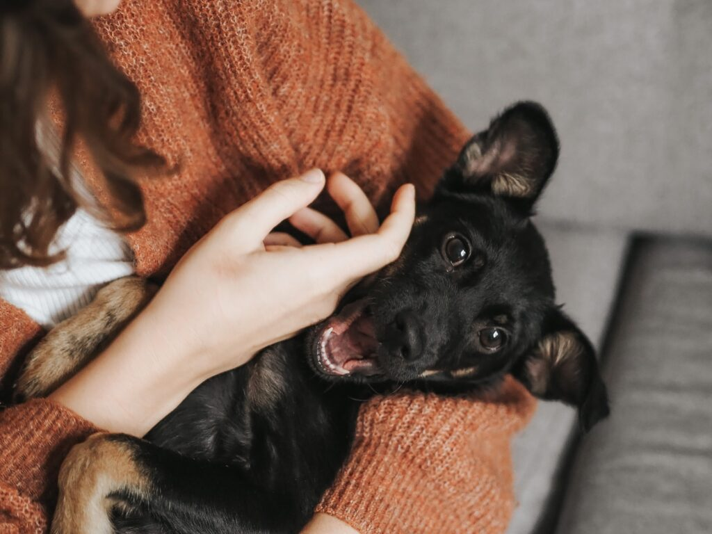 how to keep house smelling good with pets